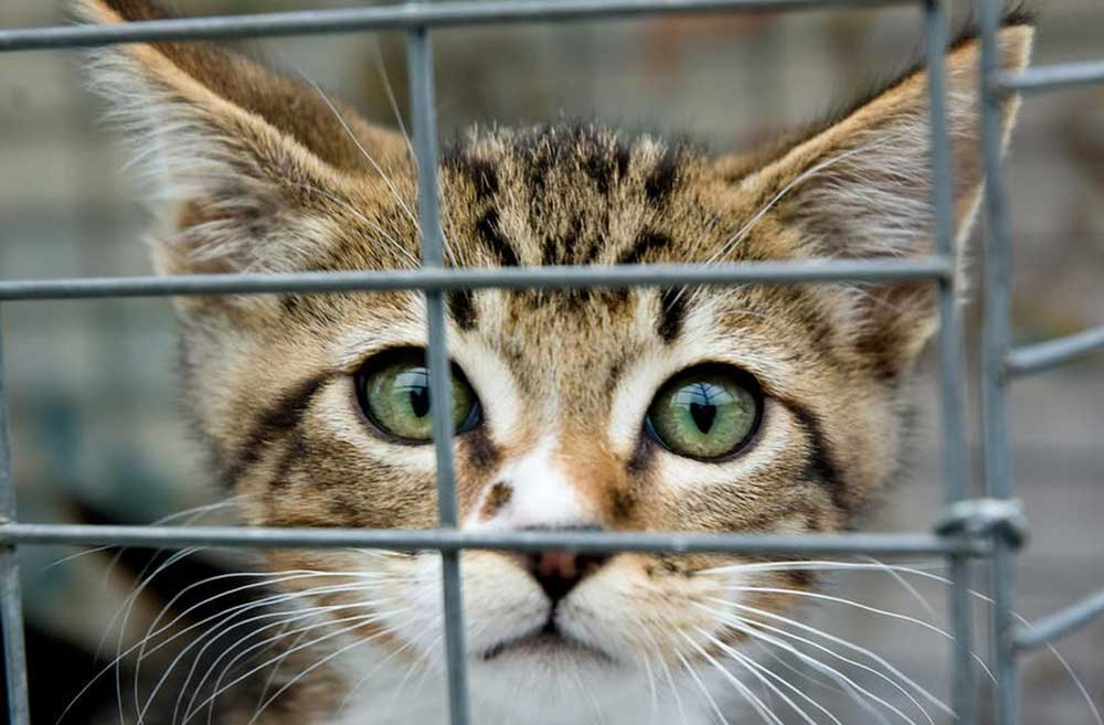 Tips When Going to the Animal Shelter