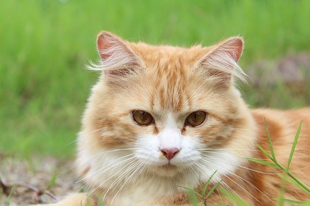 Cat Behavior – Why Do Cats Prefer to Be Alone?
